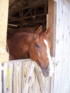 Paddy, my horse.
