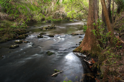 A beautiful Florida river